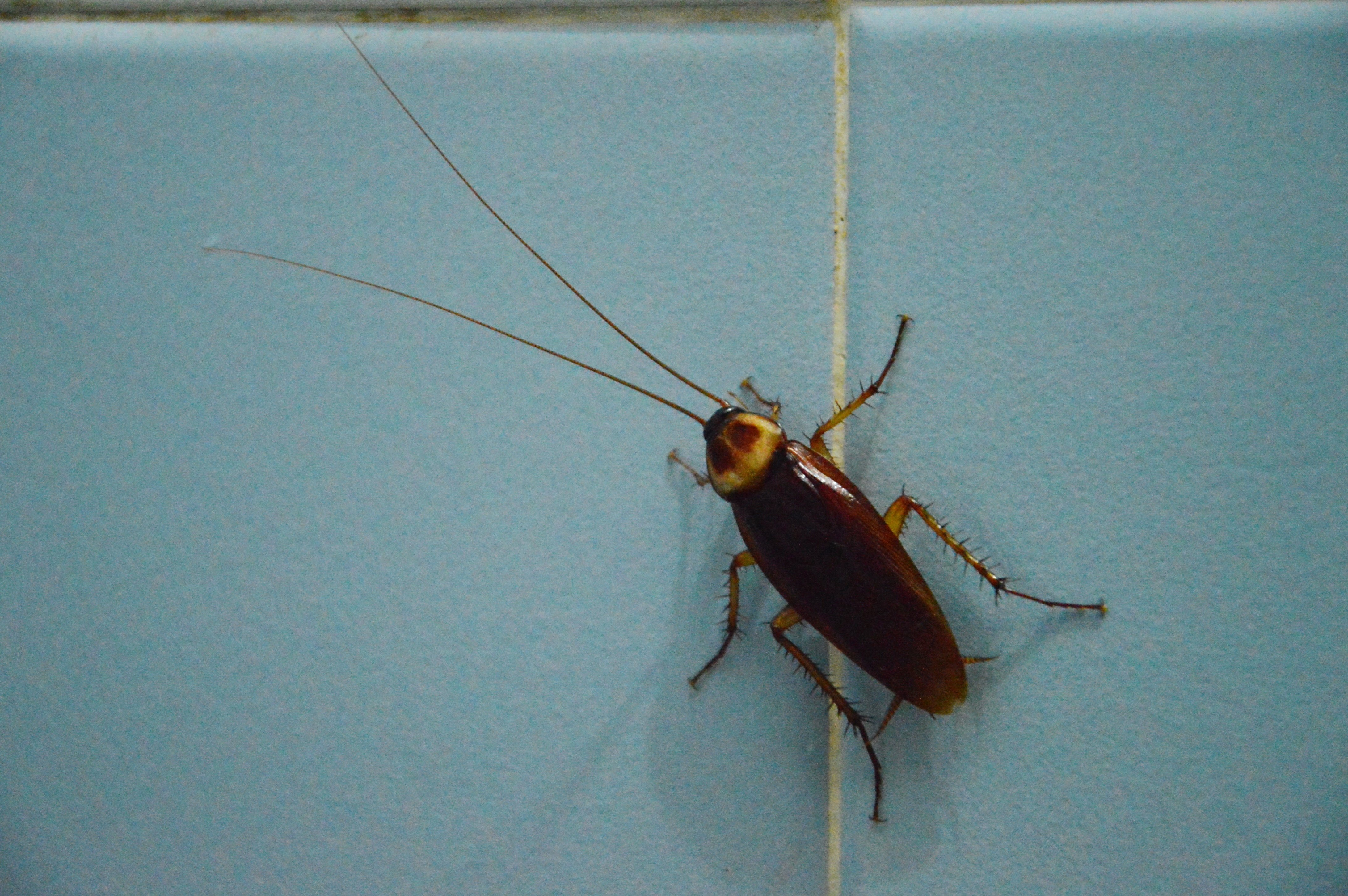 7-things-you-should-know-roaches