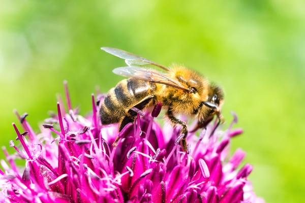 doweneedbees