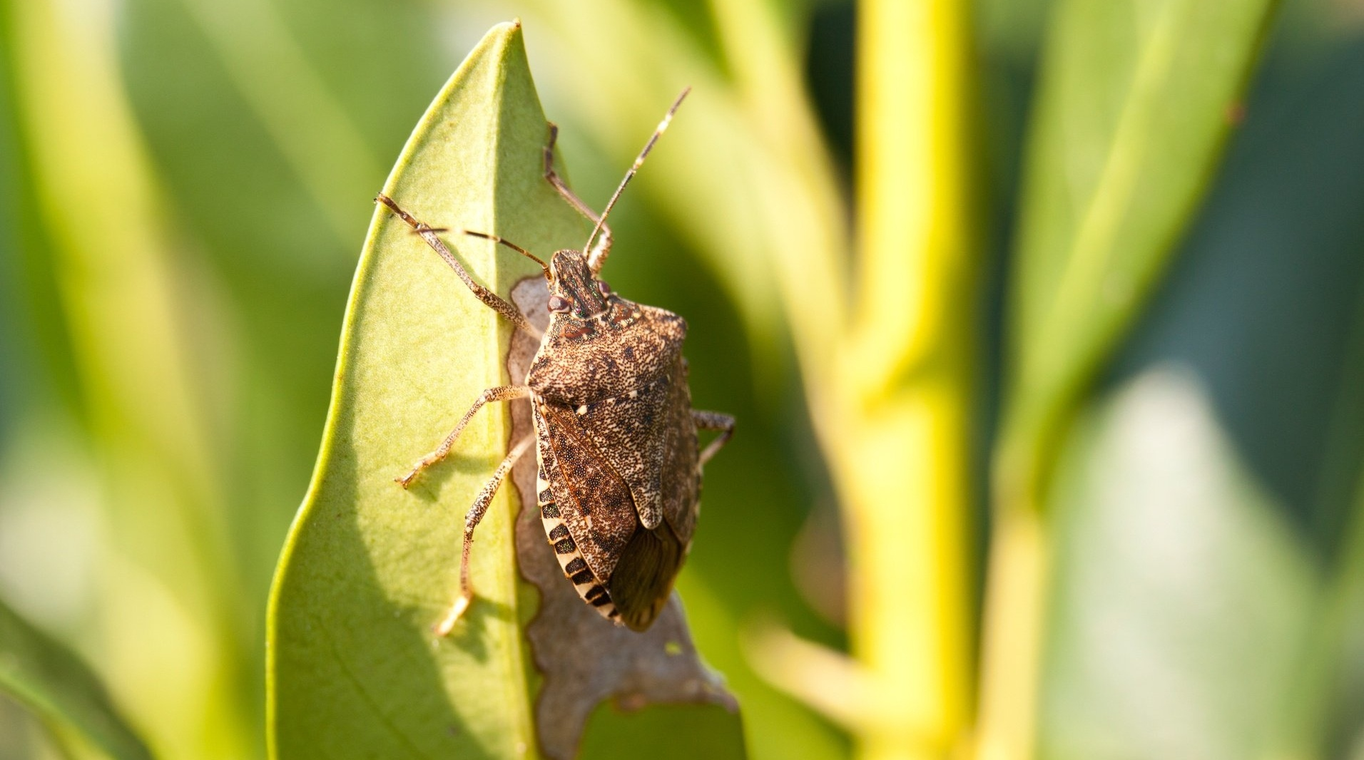 stink bug-477304-edited