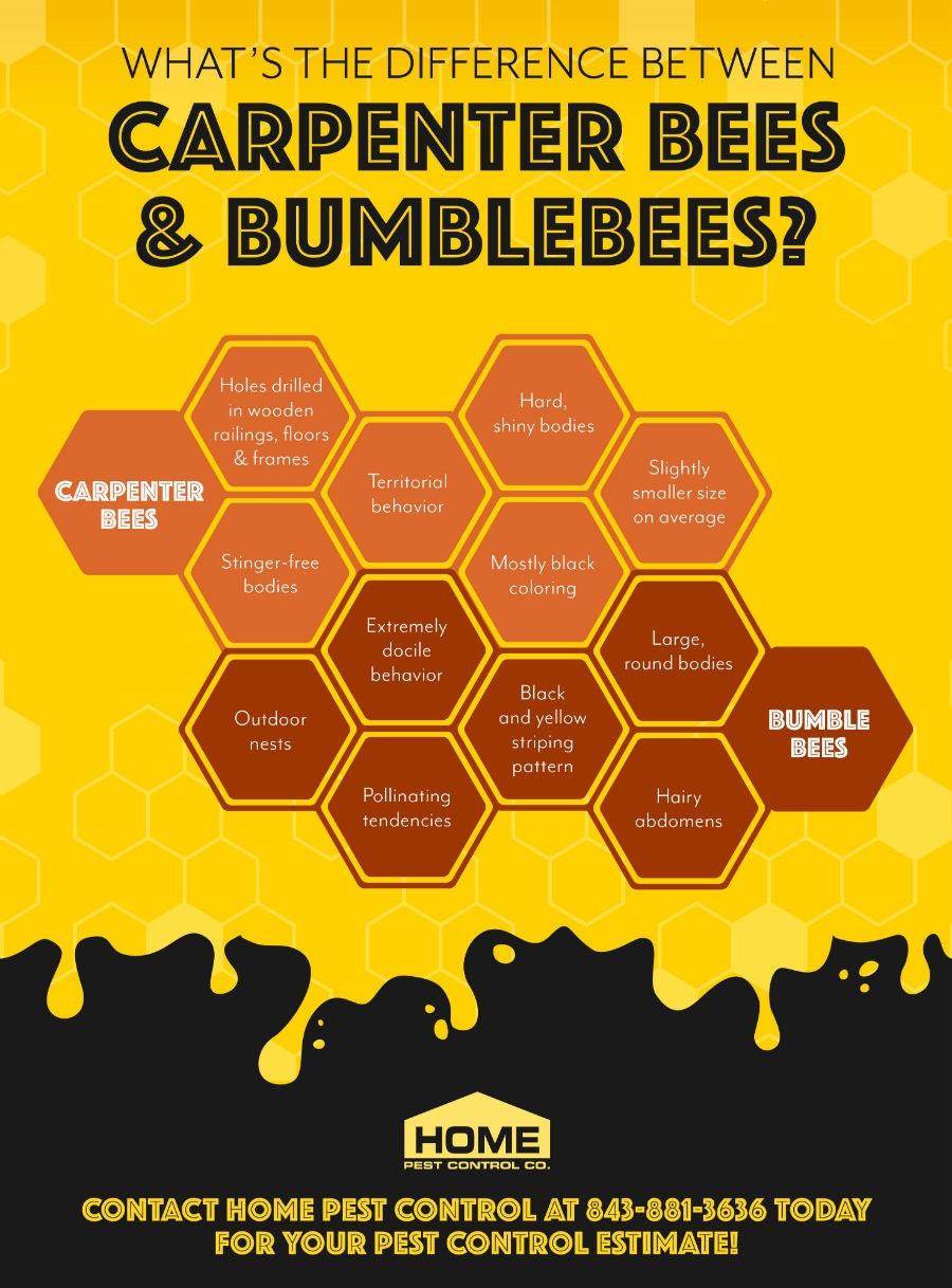 bees bumblebees
