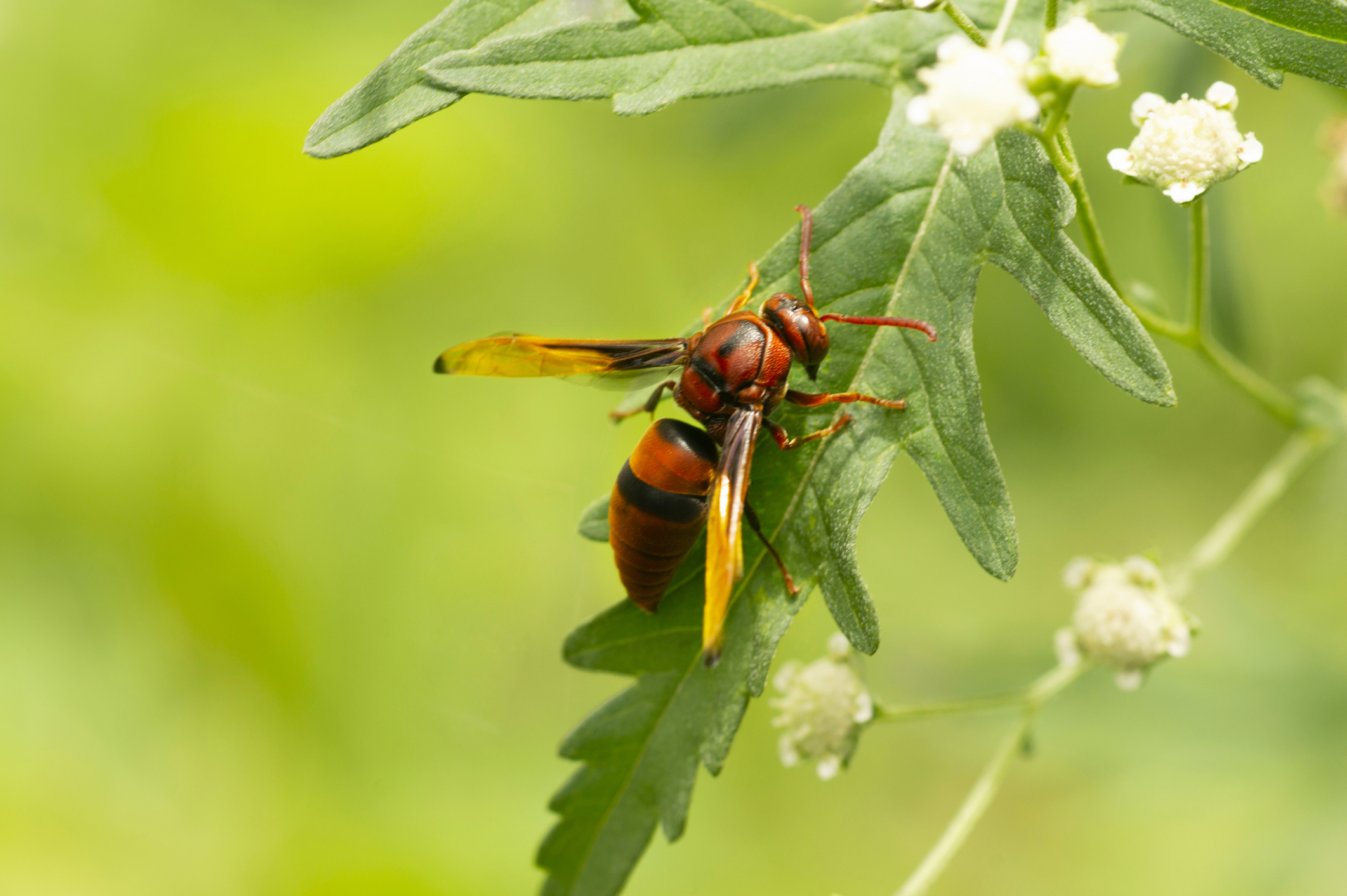 Paper Wasp Image 02
